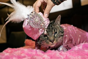 The Algonquin Cat's Cat Fashion Show photo _MED9929_port.jpg
