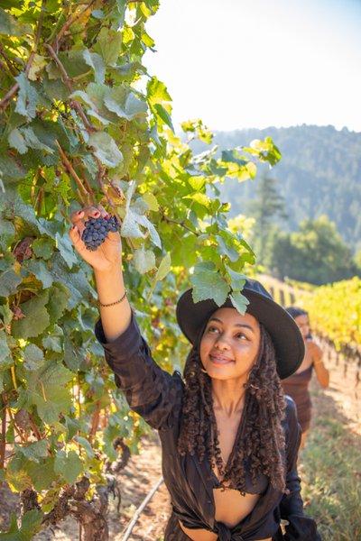 California Wine Country cover photo