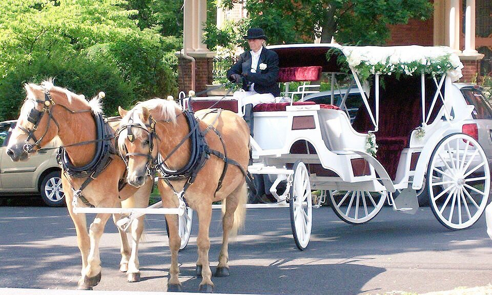 The Shenandoah Carriage Company photo Red seat vis-a-vis with Haflingers.jpg