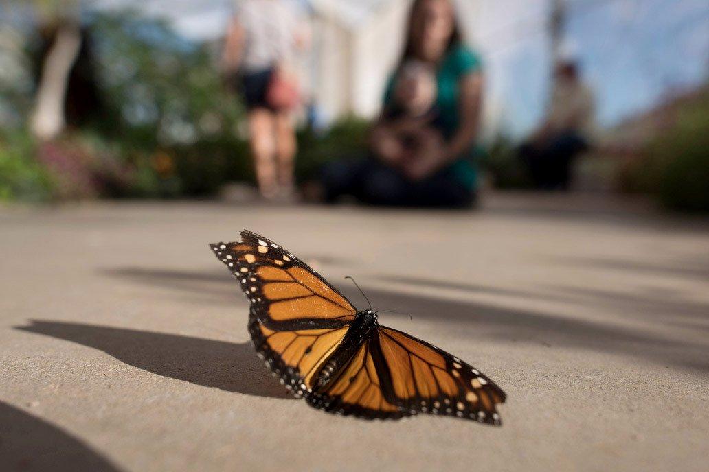 Butterfly Exhibit photo butterfly _10.jpg