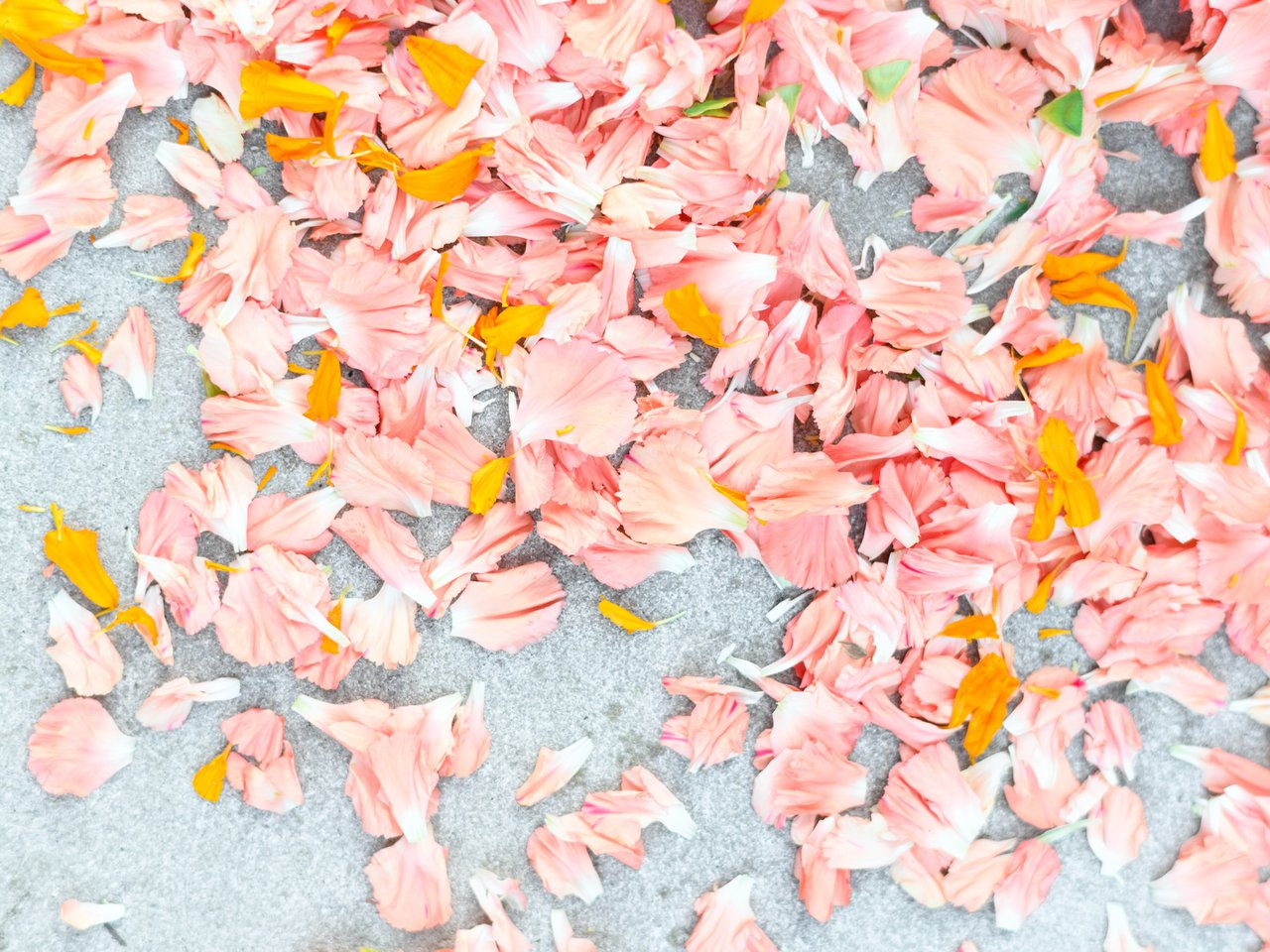 Dia de Los Muertos photo apiary-9792.jpg