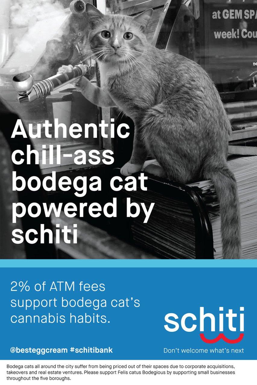 Schitibank photo Schitibank_Bodegacat.jpg