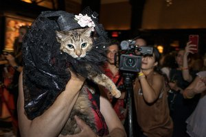 The Algonquin Cat's Cat Fashion Show photo _MED0061_port.jpg