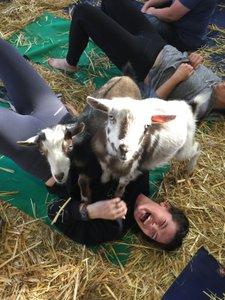 Original Goat Yoga Team Building photo IMG_1257.jpg