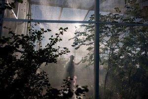 Butterfly Exhibit photo butterfly _11.jpg