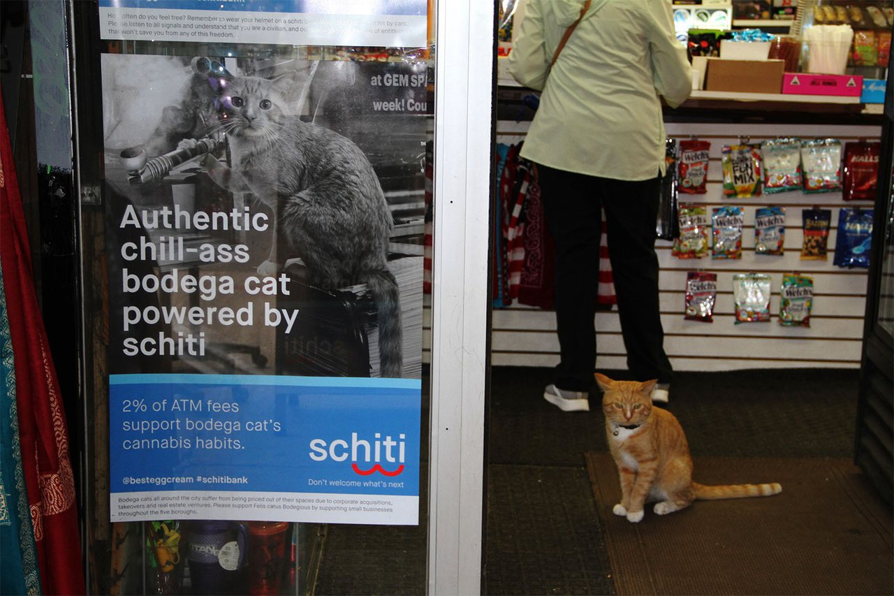 Schitibank photo Bodega-Cat.jpg