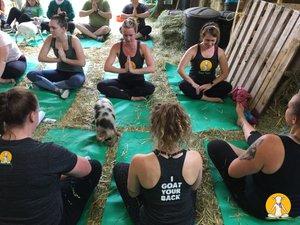 Original Goat Yoga Team Building photo 39108265_357049088167414_5766955581654958080_o.jpg