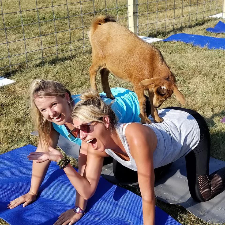Original Goat Yoga photo 37926729_430220087474583_2433130859021205504_n.jpg