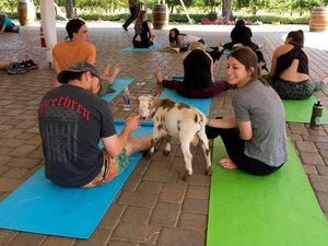 Original Goat Yoga & Wine Tasting photo 39406685_2159134460825755_3773330989481197568_n.jpg