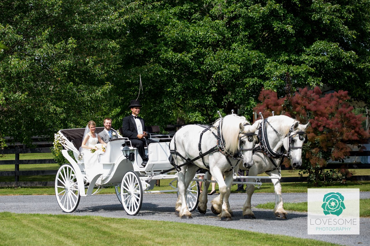 The Shenandoah Carriage Company photo Black seat vis-a-vis with white team.jpg