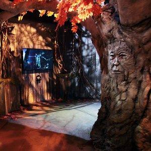 Game of Thrones Exhibition Tour photo 1556033105641_gane-of-thrones-season-6-exhibition-tree.jpg