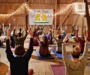 Original Goat Yoga photo 40831853_463462827483642_7234241711344451584_n.jpg