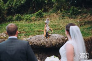 Point Defiance Zoo Wedding photo D40ACC65-8CF5-42A3-A29C-0912FEC422AB.jpg