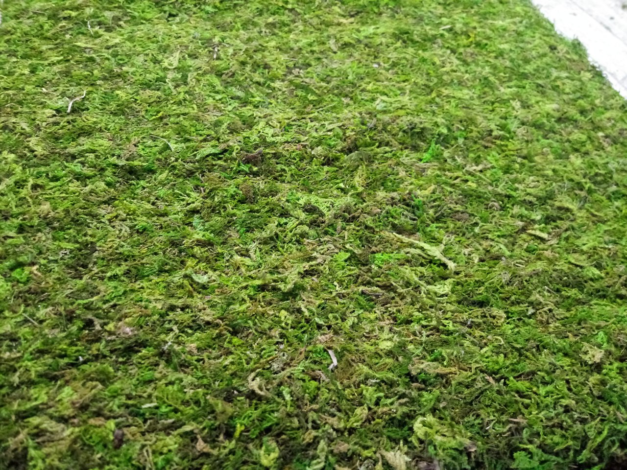 Three Olives Rose Moss Wall photo 20200707_133554.jpg