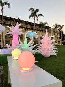 Illumination Garden photo fullsizeoutput_3aaf.jpg